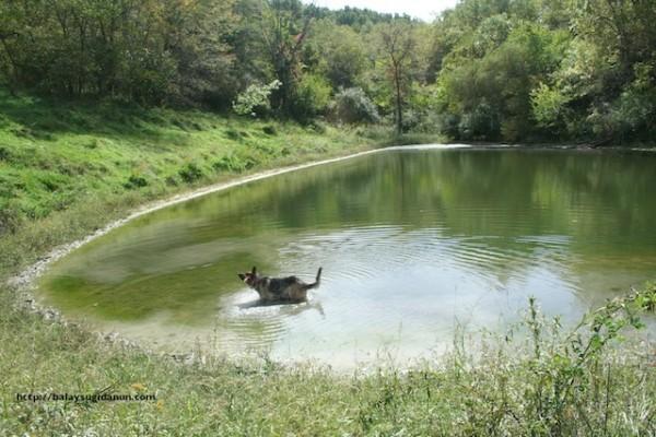 Ang lake kag andang ayam.