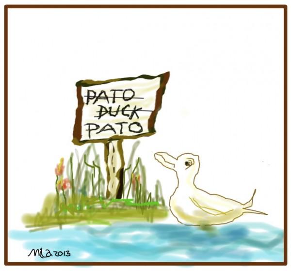 Pato2