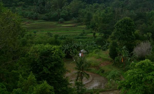 """""""Taramwa-an: Ang Igtuba halin sa Karsada kang Baryo"""" /Hulyo 2012 @pangga_gen"""