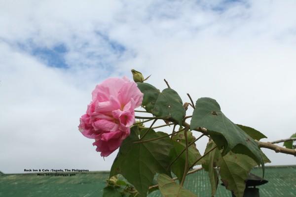 flower_rooftop