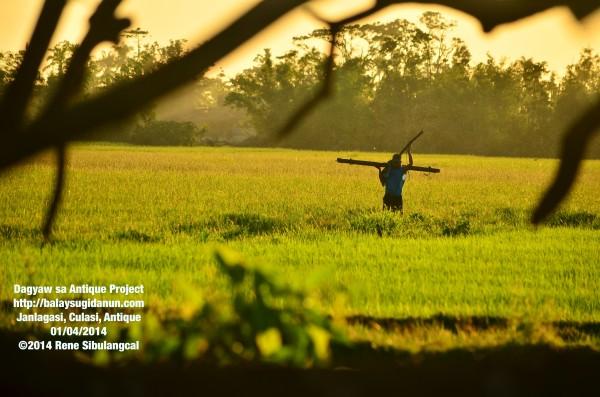 janlagasi farmer