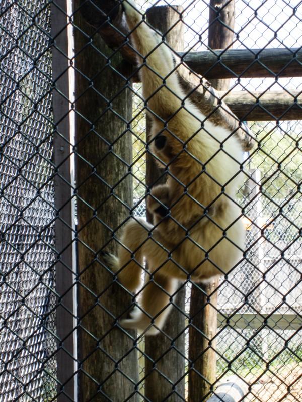 Monkey sa York /Nay Elma
