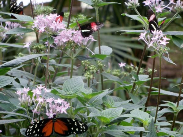 Sa York Wildlife Park /Nay Elma