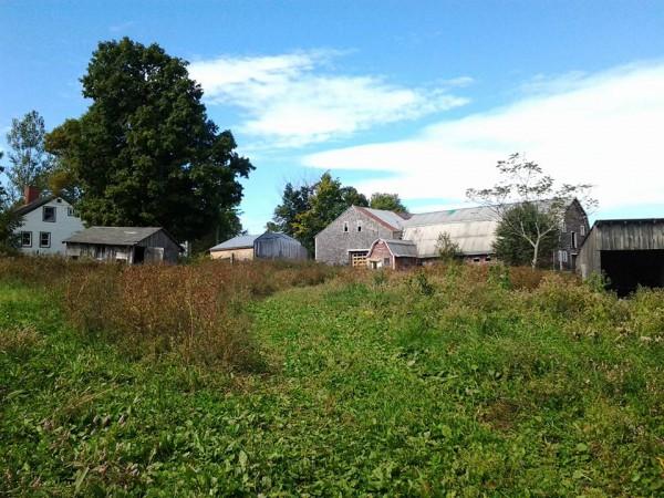 Andrews Farm